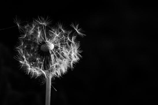 """""""Dans le vent"""" (in vogue)"""